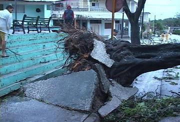 Sandy, el huracán deforestador, y su secuela en Cuba