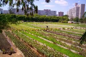 Proporciona agricultura urbana empleos y productos frescos en Cuba